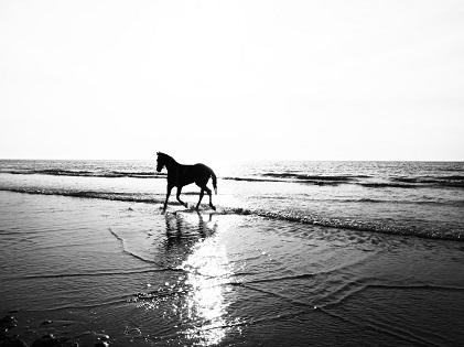 horse on seashore beach